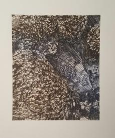 "Goose Barnacles, 2016, Intaglio, Series of 15, 14x11"", Krystal Booth"